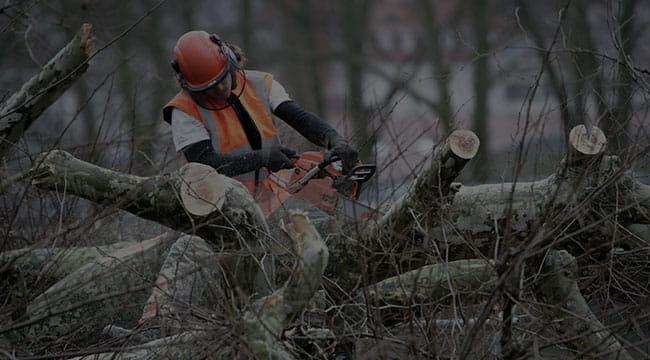 Milwaukee Tree Service